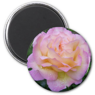 Rose with rain drops magnet