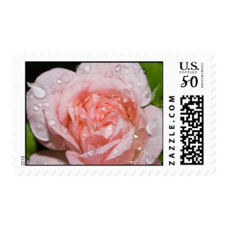 Rose With Rain Drops Stamps