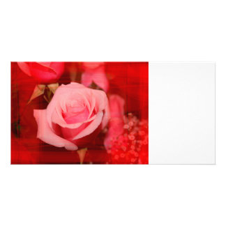 rose with red streaks pretty flower design picture card