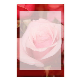 rose with red streaks pretty flower design stationery