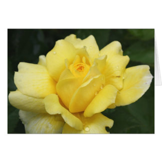 Rose - Yellow Beauty Card