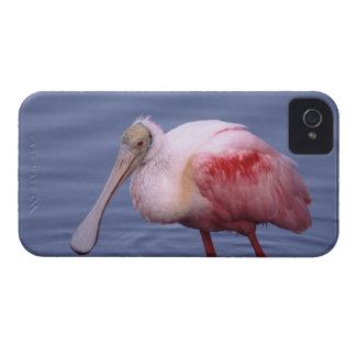 Roseate Spoonbill (Ajaia ajaja) iPhone 4 Case