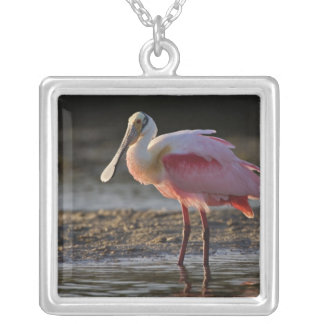 Roseate Spoonbill, Ajaia ajaja, Ding Darling Silver Plated Necklace