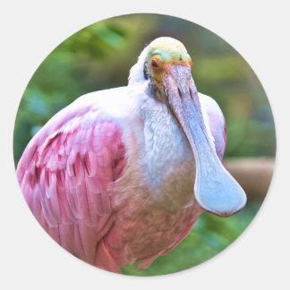 Roseate Spoonbill Bird Sticker
