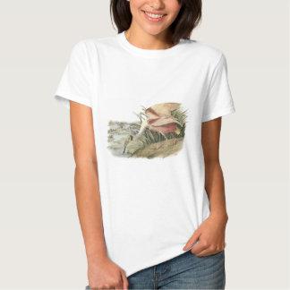 Roseate Spoonbill by Audubon T Shirt