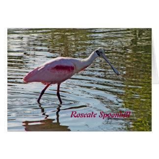Roseate Spoonbill Card