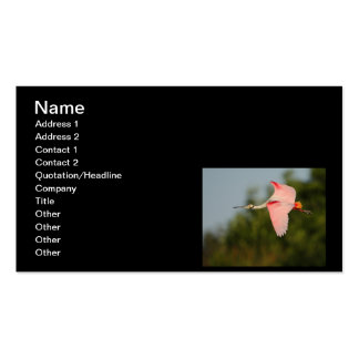 Roseate Spoonbill in Flight Business Card Templates