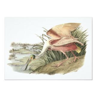 Roseate Spoonbill, John Audubon Card