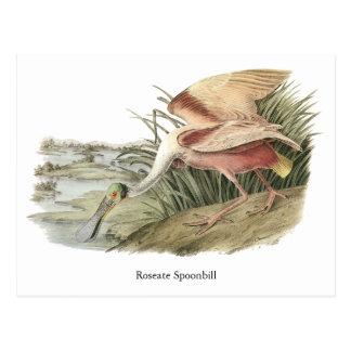 Roseate Spoonbill, John Audubon Postcard