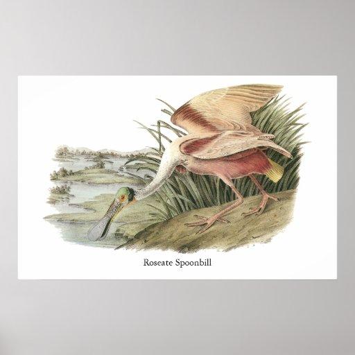 Roseate Spoonbill, John Audubon Print