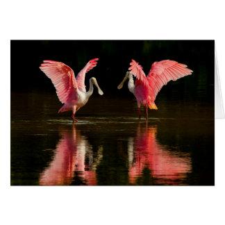 Roseate Spoonbill Mating Dance Card