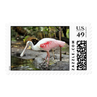 Roseate Spoonbill Postage Stamps Postage Stamp