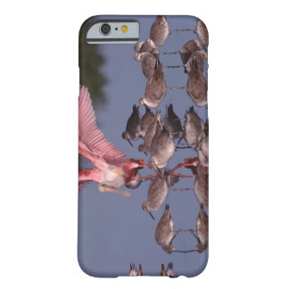 Roseate Spoonbill with Willets in shallow water Barely There iPhone 6 Case