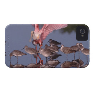 Roseate Spoonbill with Willets in shallow water iPhone 4 Case-Mate Case