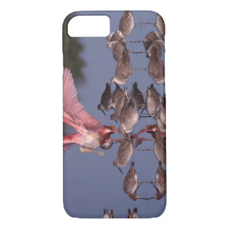 Roseate Spoonbill with Willets in shallow water iPhone 7 Case
