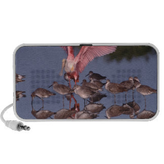 Roseate Spoonbill with Willets in shallow water iPhone Speakers
