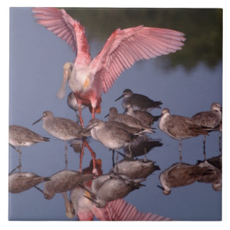Roseate Spoonbill with Willets in shallow water Tile