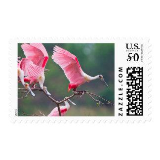 Roseate Spoonbills (Ajaia Ajaja) Landing Postage