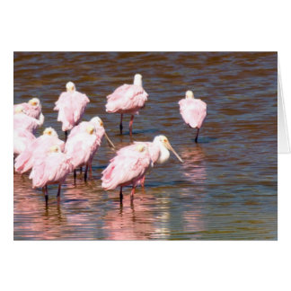 Roseate Spoonbills on Caladesi Nature Trail Card
