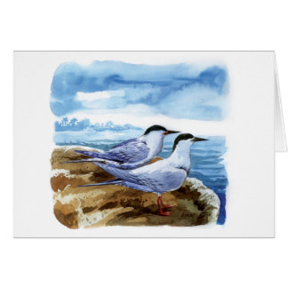 Roseate tern card