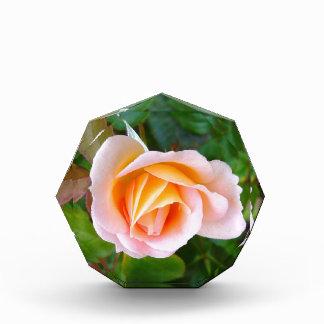 rosebud acrylic award