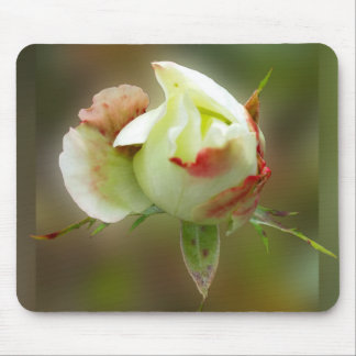 rosebud glowing mouse pad