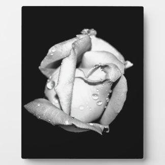 Rosebud in Black and White Easel Plaque
