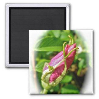 Rosebud Magnet