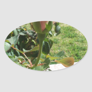 Rosebud! Oval Sticker