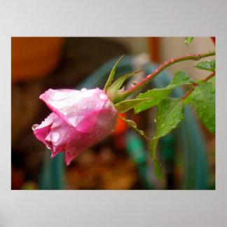 rosebud, raindrops & leaves poster