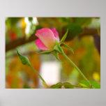 Rosebuds Print