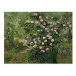 Rosebush en el flor, Vincent van Gogh Tarjetas Postales