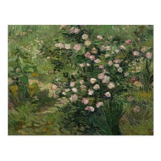 Rosebush in Blossom, Van Gogh Fine Art Postcard
