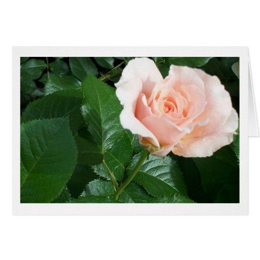 RoseCard Tarjeta De Felicitación