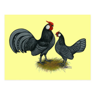 Rosecomb Blue Bantams Postcard
