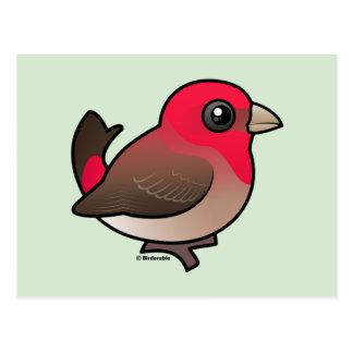 Rosefinch común lindo postales