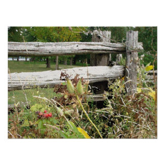 rosehips in front of split rail fence poster