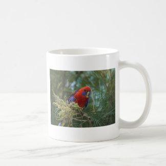 Rosella carmesí taza