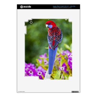Rosella carmesí y contexto de las orquídeas Laming Pegatina Skin Para iPad 3