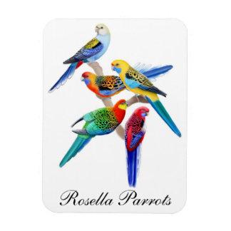 Rosella Parrots Customizable Premium Magnet