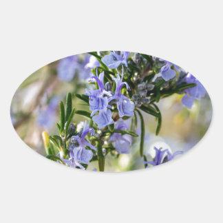 Rosemary blossom in spring macro oval sticker