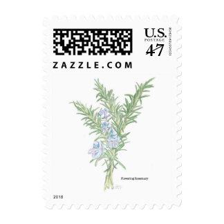 Rosemary de florecimiento sello postal