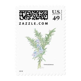 Rosemary de florecimiento sellos