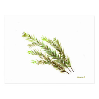 Rosemary herb kitchen art watercolour painting postcard