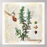 Rosemary, impresión botánica del arte del colibrí póster
