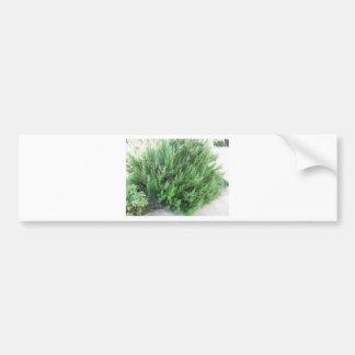 Rosemary plant bumper sticker