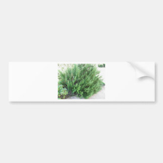 Rosemary plant car bumper sticker