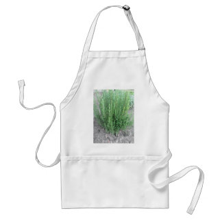 Rosemary plant in the garden . Tuscany, Italy Adult Apron