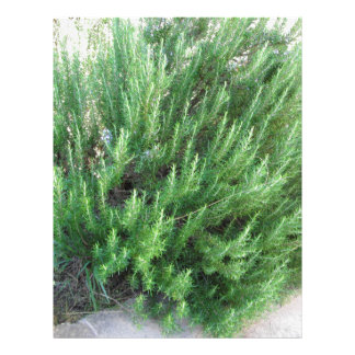 Rosemary plant letterhead