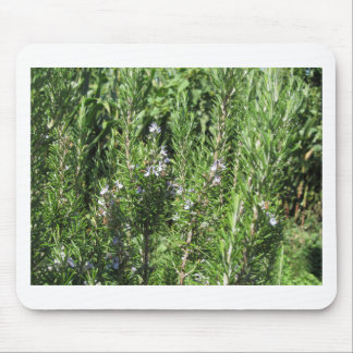 Rosemary plant mouse pad